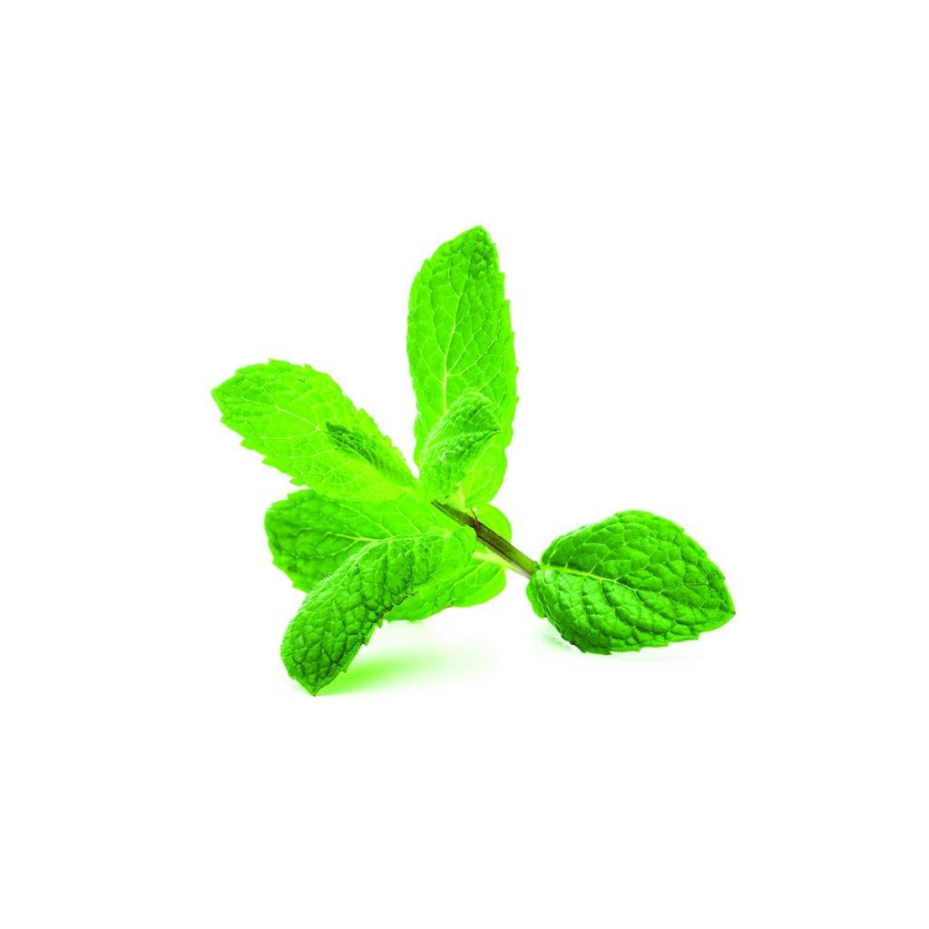 Ingredient- Spearmint for Hair Rinse Concentrate by The Switch Fix
