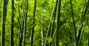 Why Bamboo Might Be Our Favourite Superhero Of All Time